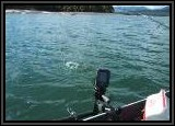 Pete's fish breaking water. That;s our portable Humminbird fish finder you see.