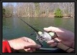 When fishing with the Rat-L-Trap lure we used a 7ft medium light bait caster or equivalent spinning rod, and a smooth casting reel. Line used was 15lb braid with a 12lb fluro leader. We always use a leader cut 6ft to 8ft because this water is very clear and the braid might spook the fish.