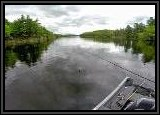 We caught some really nice fish in this cove in the northern end of the lake. Overcast skies and still water is ideal for buzzbaits.