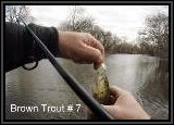 The small lure coupled with the use of the Line Dancer produced the most fish caught on this river today!